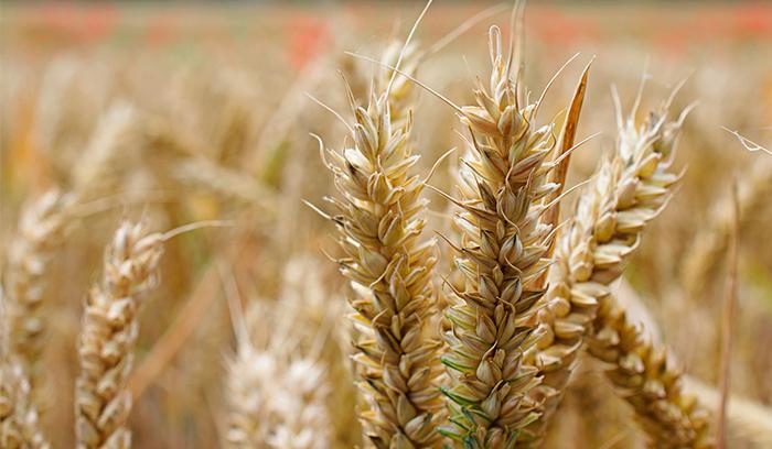 Laboratorio KUDAM consigue la acreditación ENAC para gluten en alimentos